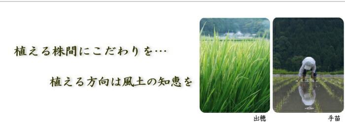 清らかな水 おいしいお米 お取り寄せ