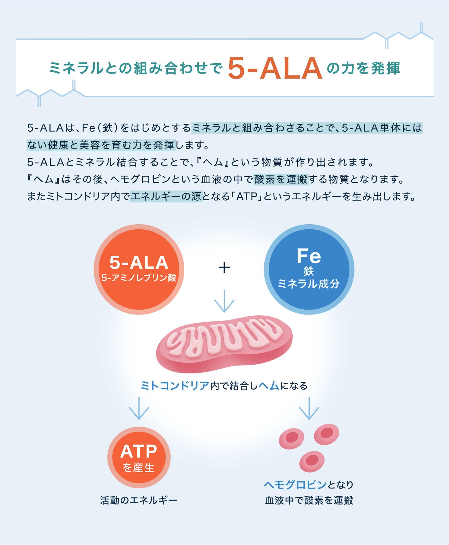 ミネラルとの組み合わせで5-ALAの力を発揮