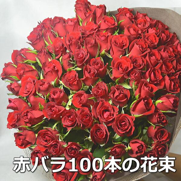 赤バラ100