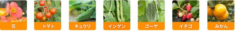 花・トマト・きゅうり・インゲン・ゴーヤ・イチゴ・みかん