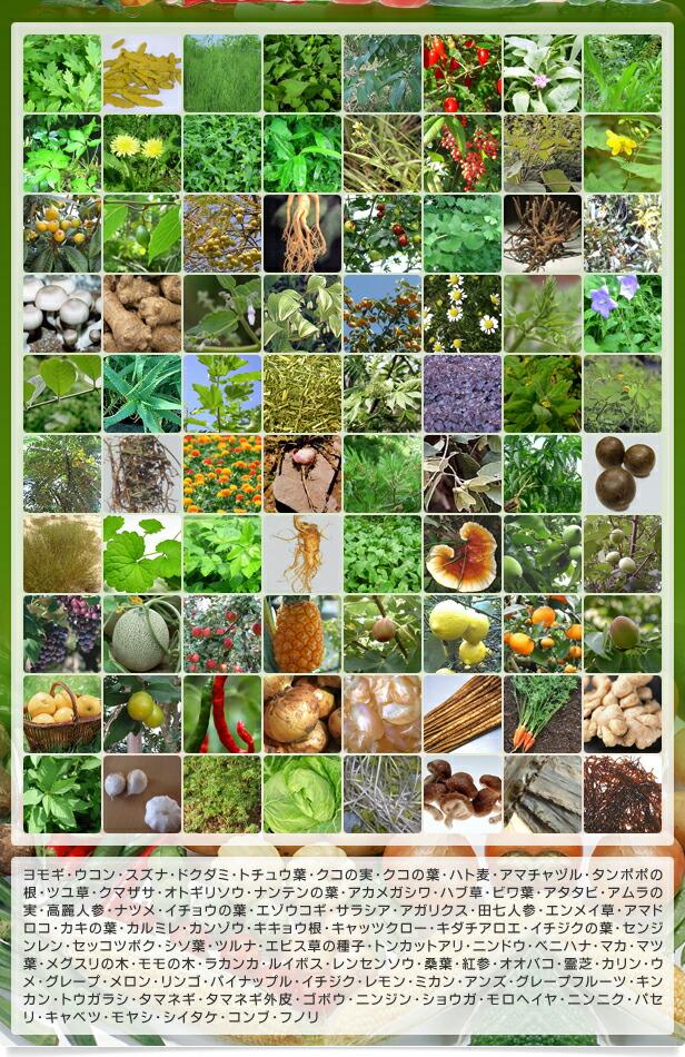 80種類の野草・野菜・果実