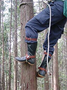 木登り中の安定感はFR-100です