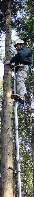 ロッキーラダーで木登り