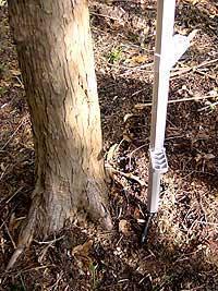 立掛け位置は、根などの障害がありますが出来るだけ木に近づけて下さい。