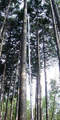 6mハシゴの立掛け角度はこんな感じです。ほぼ垂直ですね