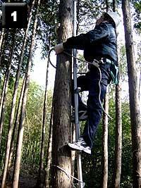 片手は木を抱きながらもう片方で安全帯ロープを持ち上げながら登ります。