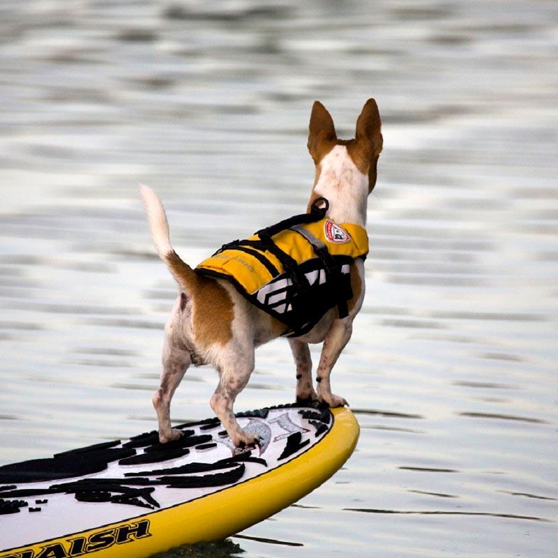 オーストラリア EZYDOG社 犬用(ドッグ) フローティングジャケット 「DFDマイクロ XSサイズ」