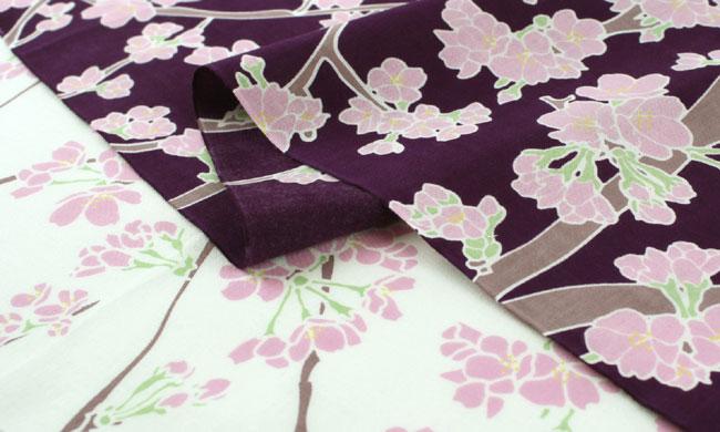 桜の花地紫