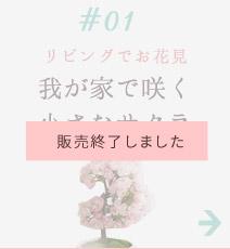#01 我が家で咲く小さなサクラ