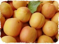 あんずの里の杏の実