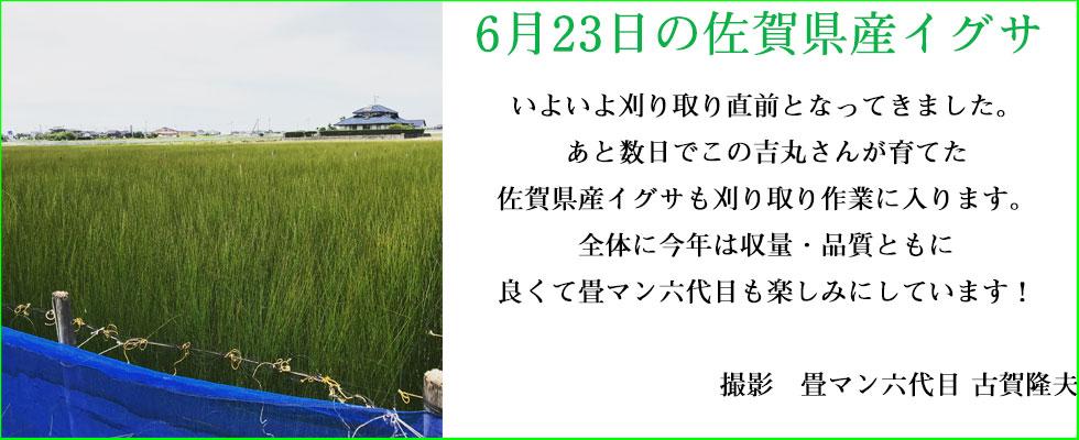 6月のい草