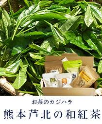 熊本芦北の和紅茶、お茶のカジハラ 梶原