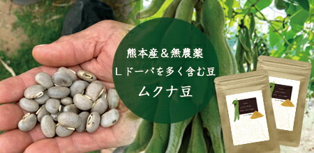 Lドーパ ドーパミン ムクナ豆サプリメント