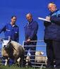 羊の安全性