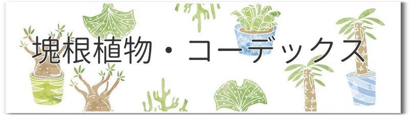 ■塊根植物・コーデックス