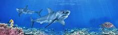 シュライヒ海の動物