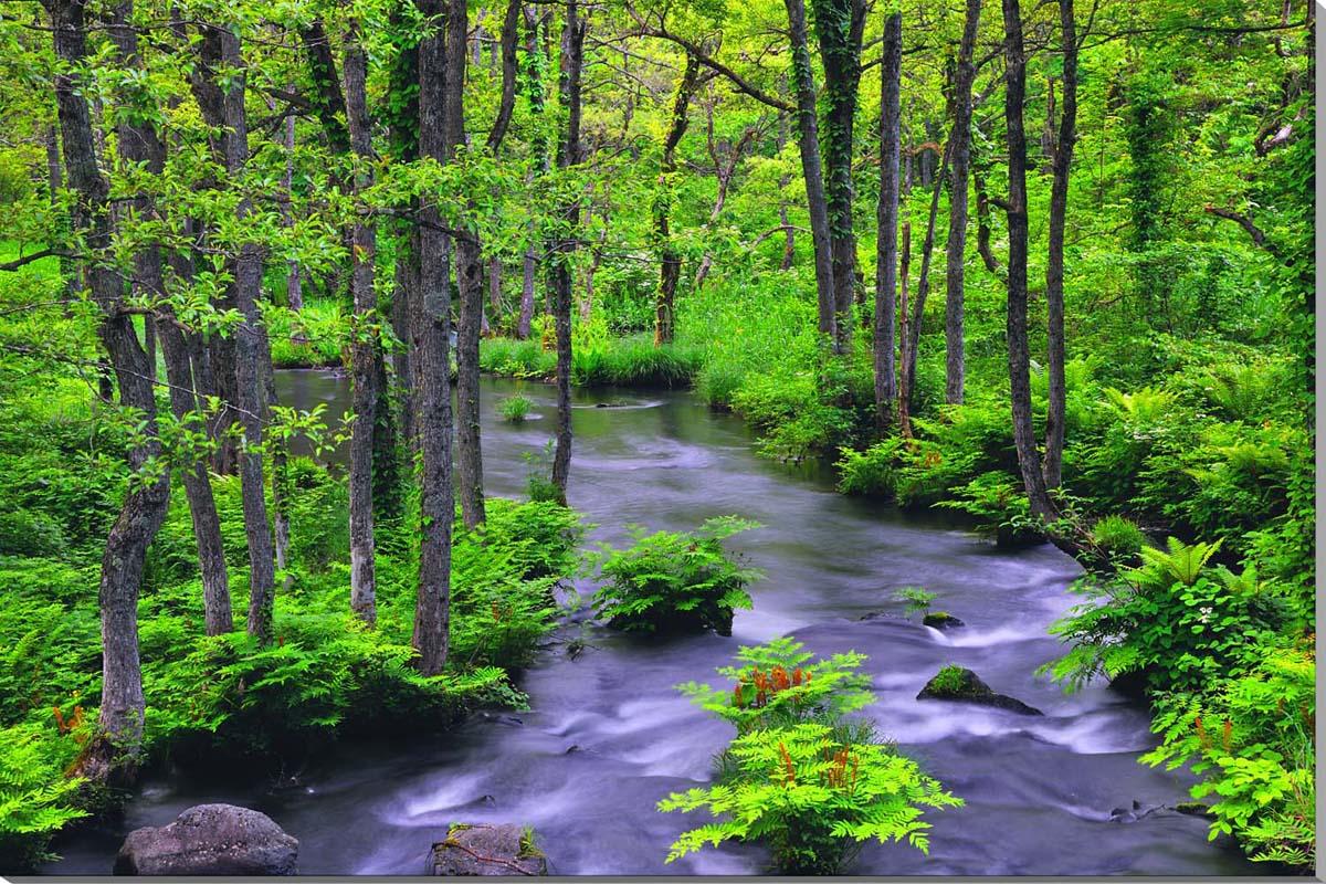 風景写真パネル 新緑の長瀬川 福島裏磐梯