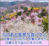 花のある風景写真