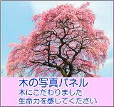 木の写真パネル