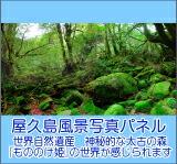 屋久島 写真パネル
