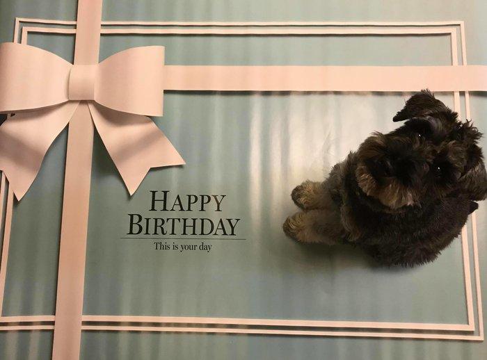 イエスタ Happy Birthday ロイヤルブル-の画像3