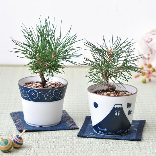 聖新陶芸 観葉植物