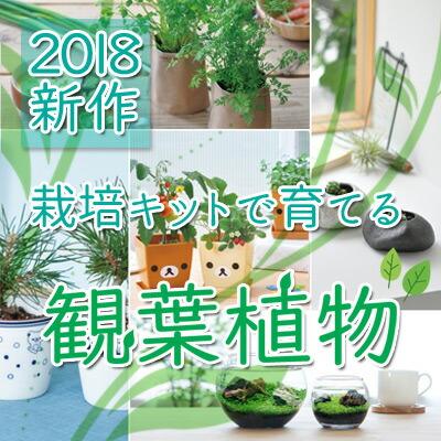 聖新陶芸2018