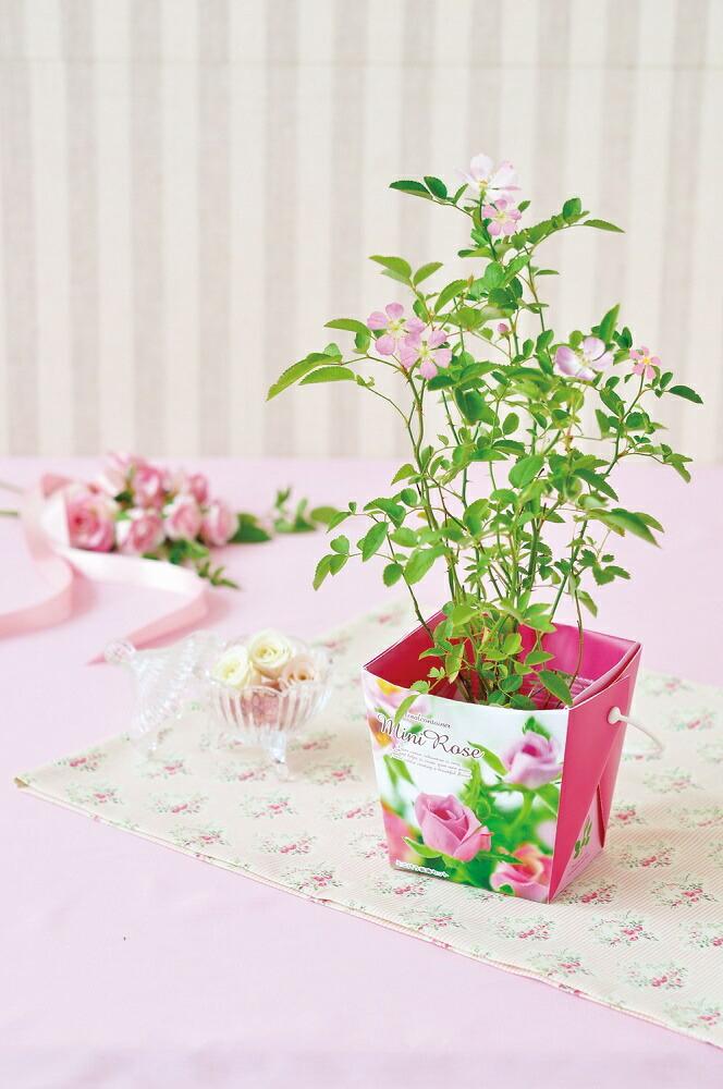 ミニバラ栽培キット