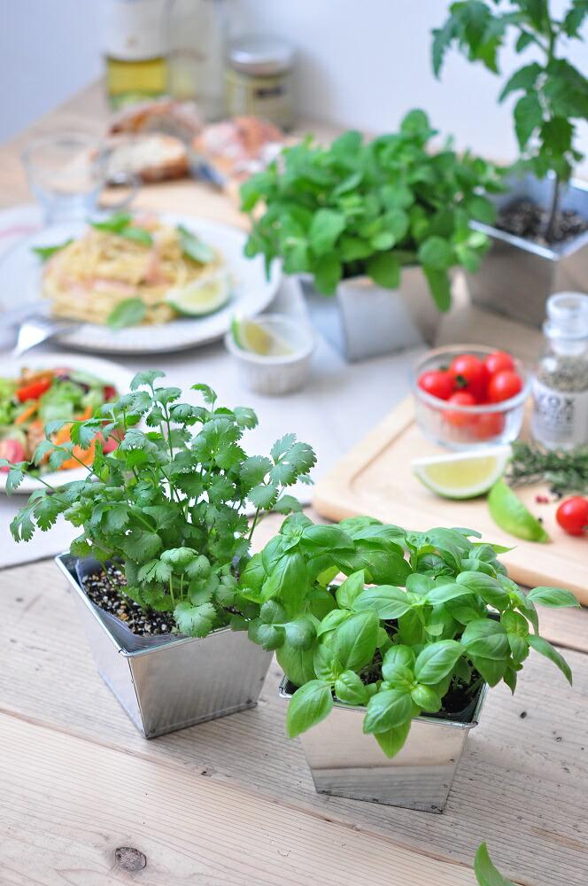 デリッシュガーデン ブリキ缶で育てる栽培キット