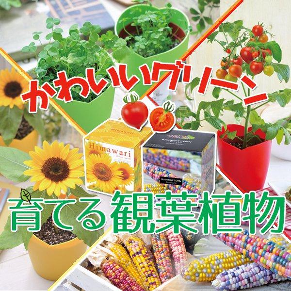 栽培 観葉植物 グリーン