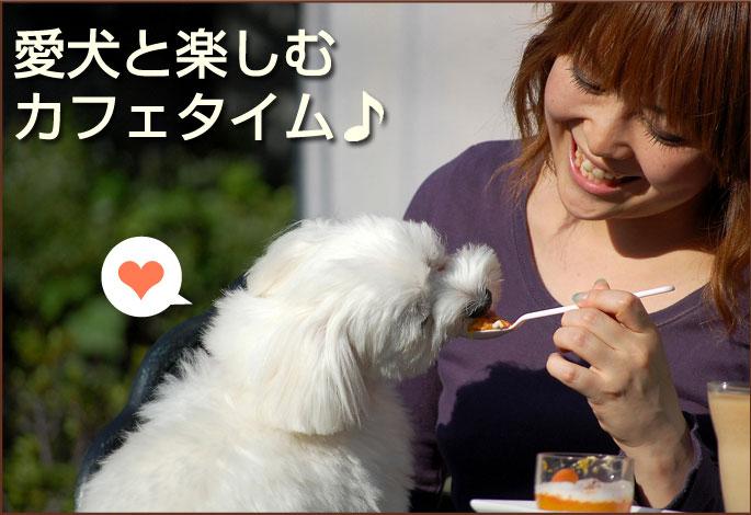 愛犬と楽しむカフェタイム