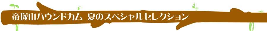 帝塚山ハウンドカム 夏のスペシャルセレクション