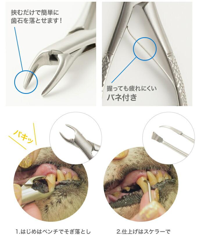 歯石取りペンチの特徴と使い方