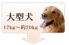アトラス大型犬サイズ