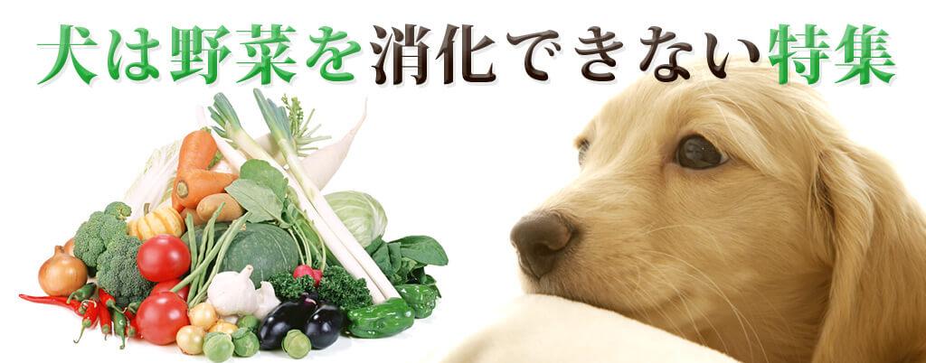 犬は野菜を消化できない特集