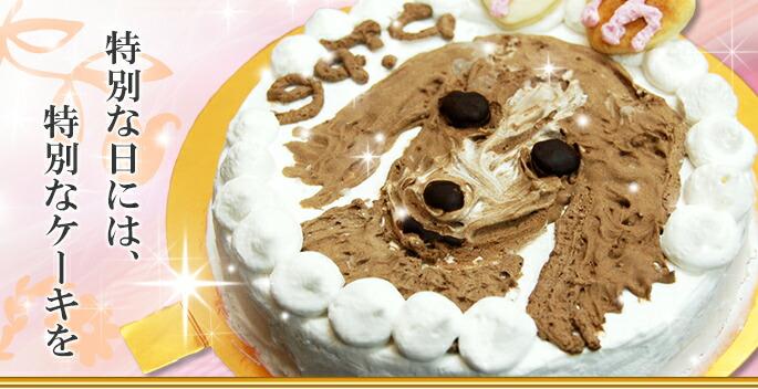 特別な日には、特別なケーキを