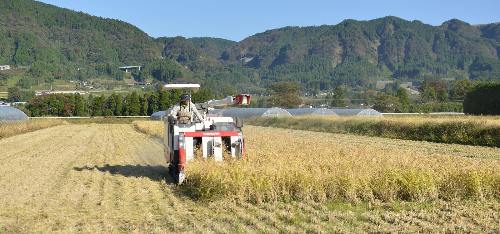 阿蘇のなかストアが作る、無農薬・無施肥栽培のお米