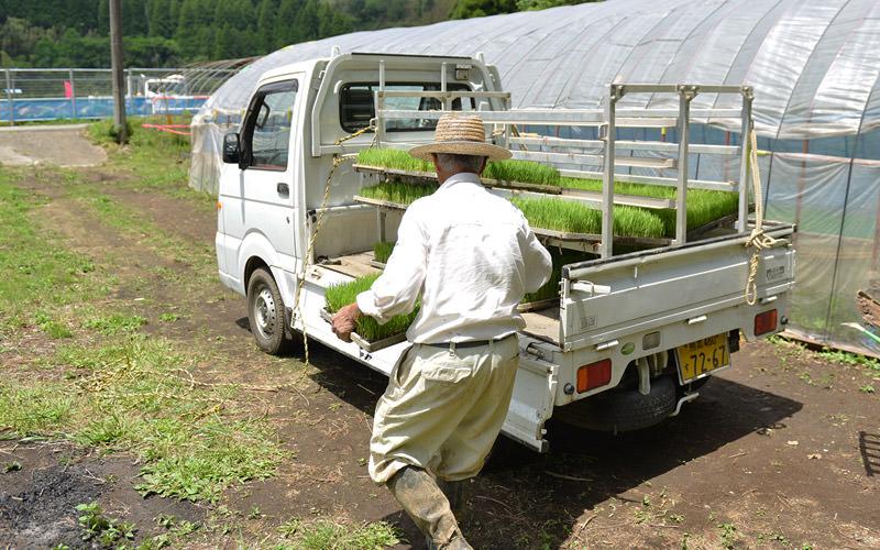 藤原さんはビニールハウスから苗を運ぶ