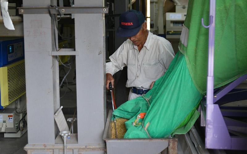 籾はライスセンターへ運んで乾燥機に移す