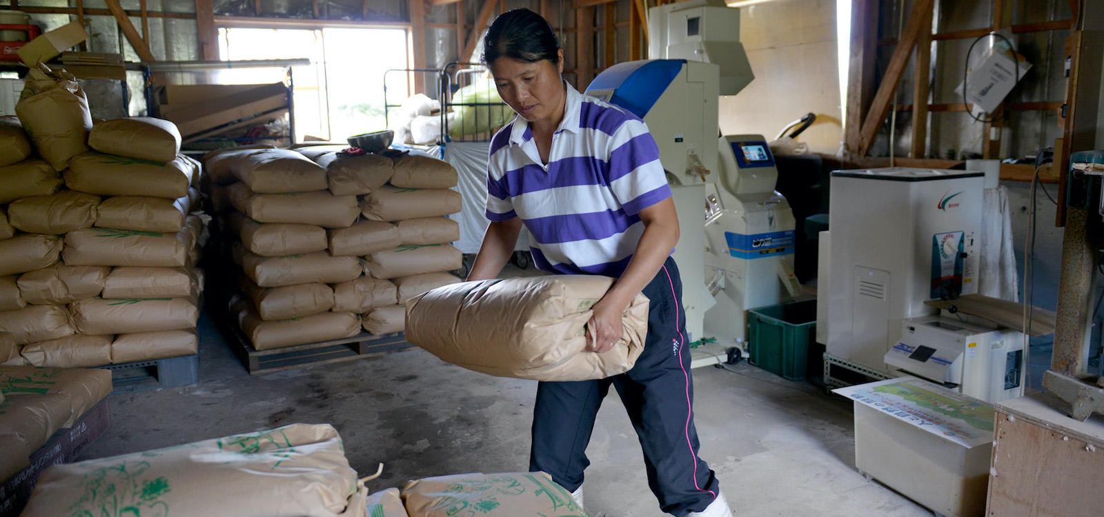 後藤明子さんが作る、アイガモ農法コシヒカリ。