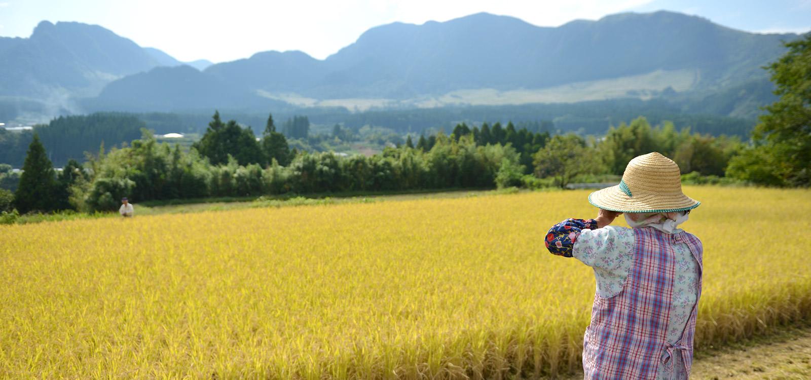 稲刈りを見る後藤松子さん。