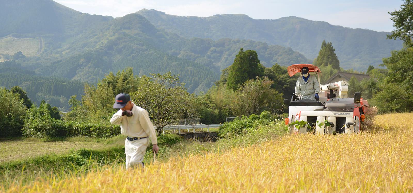松子さんの田んぼを刈る藤原さん親子。