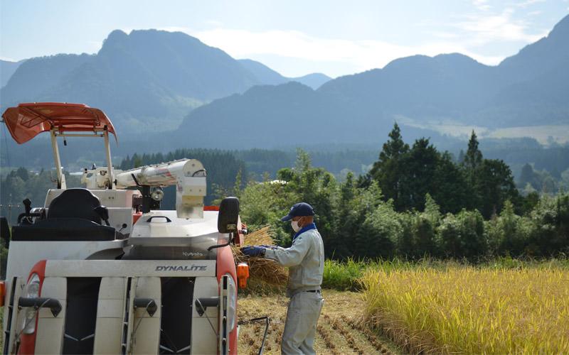 手刈りした稲をコンバインで脱穀する浩二さん