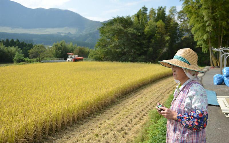 稲刈りの写真を撮る松子さん