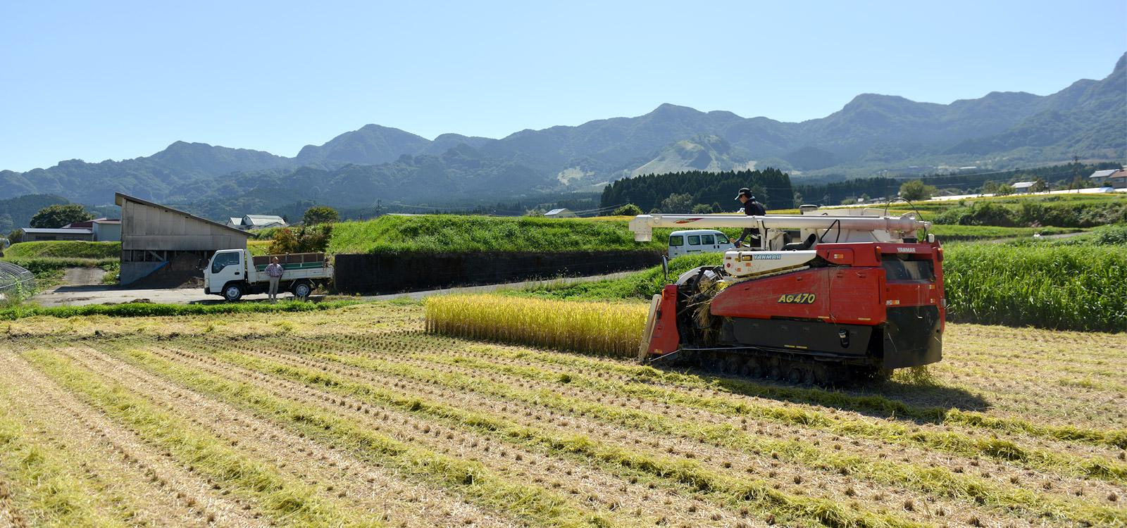 稲刈りする井芹さんの田んぼ。