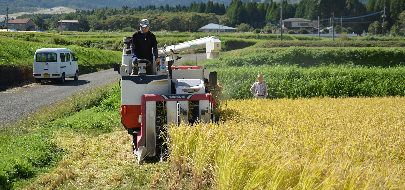 稲刈りするオペレーター