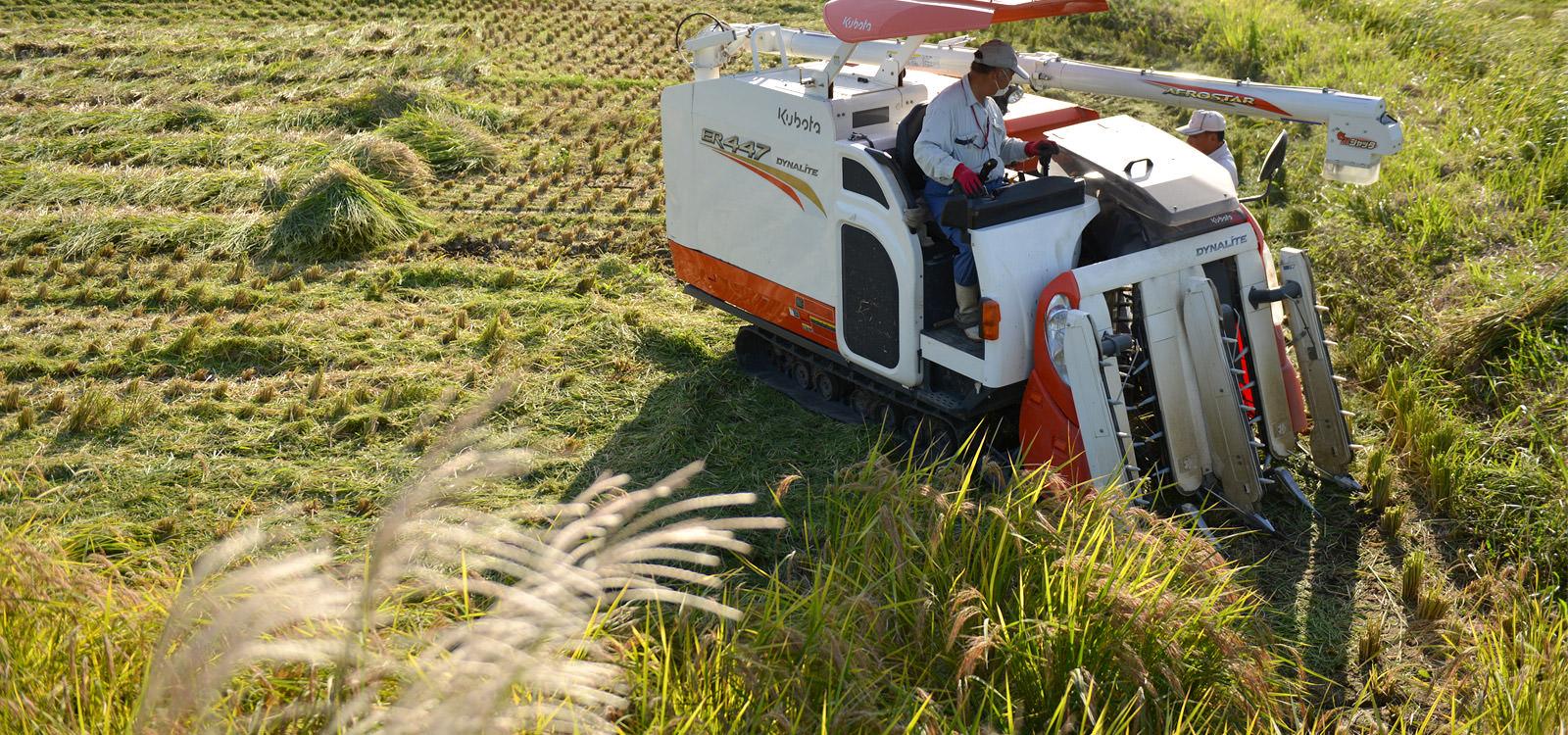 北野悦之さんが作る、無農薬・無施肥栽培のお米。