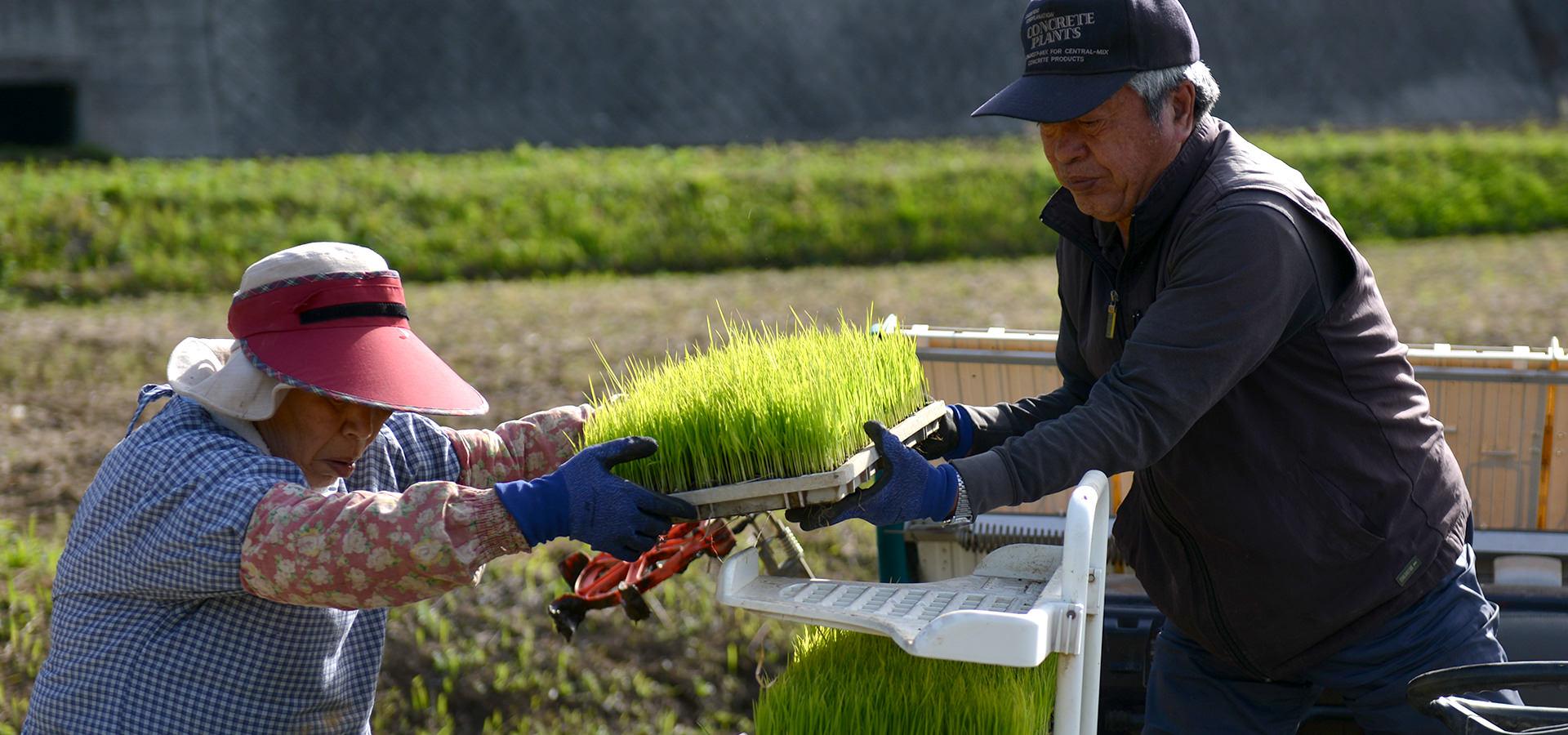 自然栽培ササニシキの田植えを行う長野さん