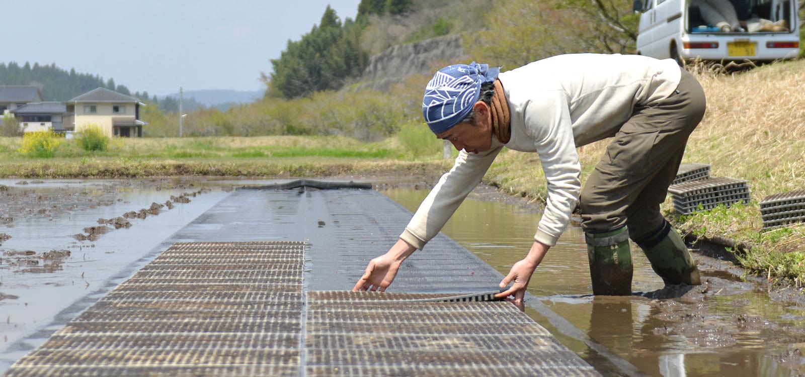 荒牧武治さんが作る、無農薬・無施肥栽培米。