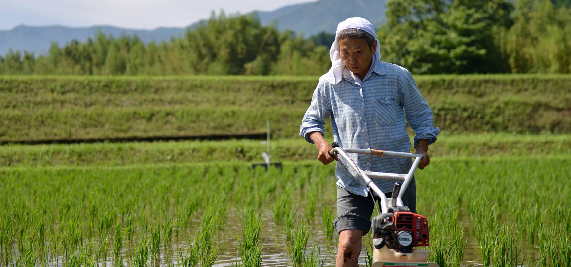 高島和子さんのお米